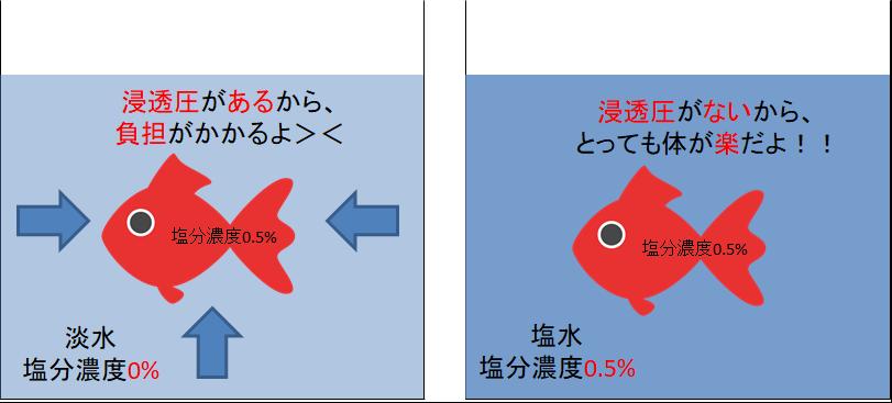 浸透圧があると負担がかかり、浸透圧がないと金魚の体に負担がかからない。