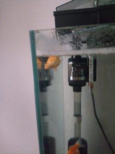 横になる金魚