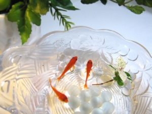 金魚鉢で飼いたい